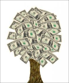 Attached Image: 000_A_Moneytree4.jpg