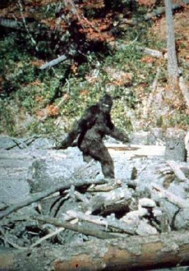 Attached Image: patterson_bigfoot_lg.jpg