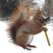 blindsquirrel2.jpg