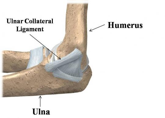 Attached Image: ulnar-collateral-ligament.jpg
