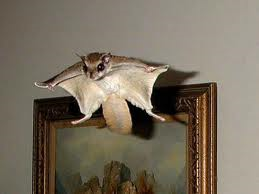 flying squirrels.png