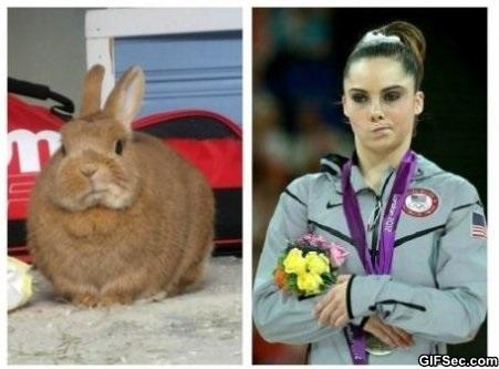 McKayla-bunny-is-also-not-pleased.jpg