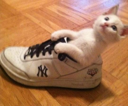 Attached Image: Yankees_Cat.jpg