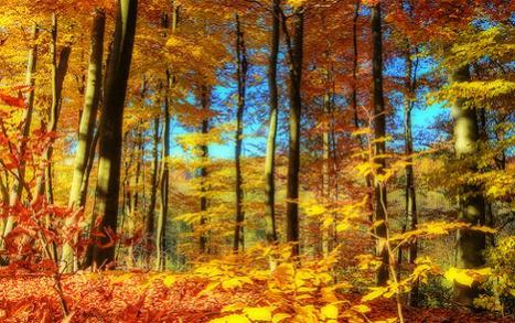 Attached Image: 5-hdr-fall-leaves.jpg